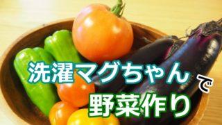 洗濯マグちゃんで野菜作り