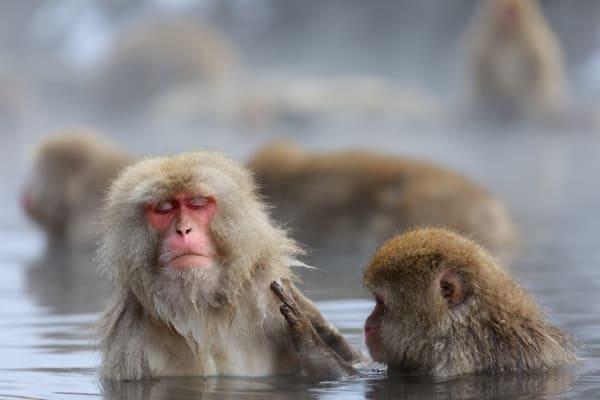 猿2匹が温泉に入っている